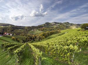 Ried Zieregg, Ratsch, Südsteiermark, Steiermark