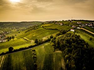 Weingärten am Eisenberg