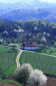 Impressionen Südsteiermark im Frühling