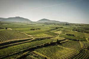 Weinbaugebiet Kremstal südlich der Donau