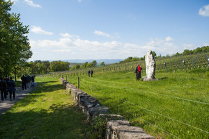 Weingipfel 2017: Riedenhopping mit Verkostung am Leithaberg; Ried Gloria, Großhöflein