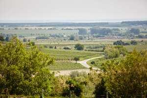 Weingipfel 2015 - Vineyard Rally through Mittelburgenland with classic and Reserve wines from Mittelburgenland DAC,m Guided and presented by winemakers Deutschkreutz, Neckenmarkt and Horitschon