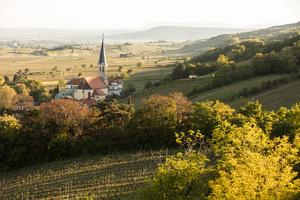 Gumpoldskirchen, Thermenregion, Niederösterreich