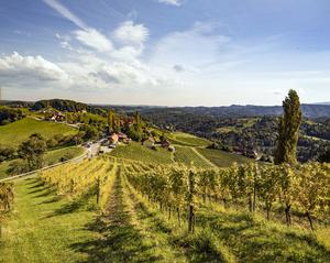 Weingärten bei Sulztal, Südsteiermark, Steiermark