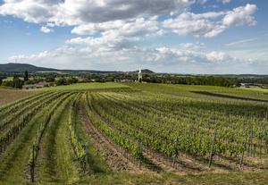 Ried innerhalb einer Ried Im Weingebirge, Ried innerhalb einer Ried Gartenäcker, Deutschkreutz, Mittelburgenland