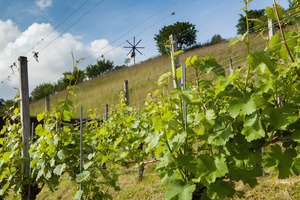 Weingipfel 2015 - Vineyard Hike and Tasting in Leutschach, Experience terroir