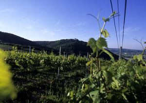 Wien - Landschaft und Weingärten