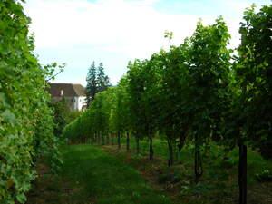 Weingärten in Kapfenstein, Vulkanland Steiermark