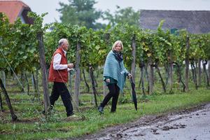 Vinexpo Explorer 2017 - Tour experience of Austria's vineyards, Malat