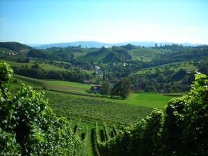 Weingärten in Ratsch in der Südsteiermark