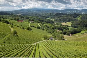 Weingipfel STMK 2009