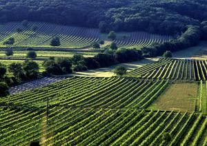 Jois, Leithaberg, Burgenland