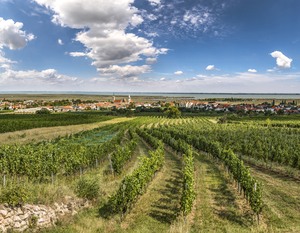 Ried Rieglband, Rust, Leithaberg, Burgenland