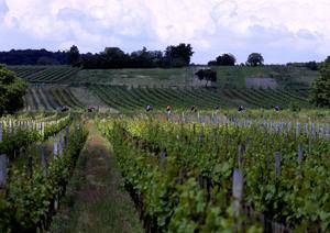 Oggau, Leithaberg, Burgenland