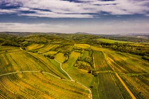 Ried altes Weingebirge Neckenmarkt Mittelburgenland