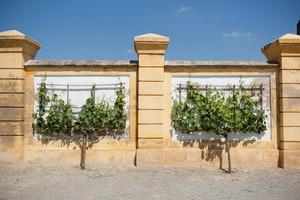 Weingipfel 2011 Discover Wine Wonderland Austria - Visit to Schloss Hof