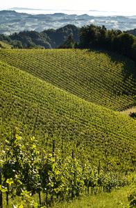 Weingipfel STMK 2009 - Sonnenaufgang in Leutschach