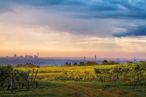 In den Weingärten von Wien