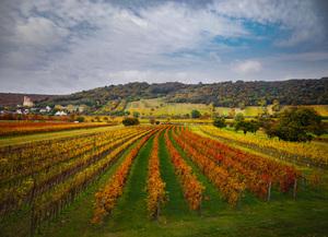 Burgenland, Leithaberg, Donnerskirchen, Berglage-Reifring