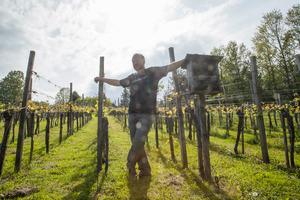 Weingipfel 2017: Uhudlerverkostung im Südburgenland präsentiert von: Martin Weinek (Winzer und Schauspieler), Weinek's Schenkhaus, Kulm im Burgenland