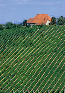 Ratsch, Südsteiermark, Steiermark