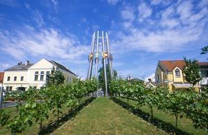 Gols, Neusiedlersee, Burgenland