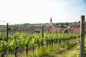 Langenlois, Kamptal, Niederösterreich