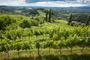 Südsteiermark Blick in Weingarten
