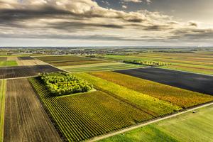 Weingärten in Andau im Gebiet Neusiedlersee