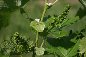 Weingipfel 2011