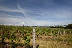 Weingipfel 2015