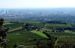 Wien Weingärten