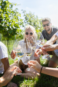 A group of young people are toasting with wine glasses